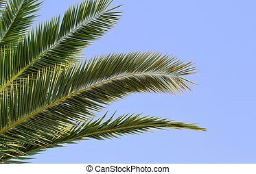 Palm leaves on blue sky