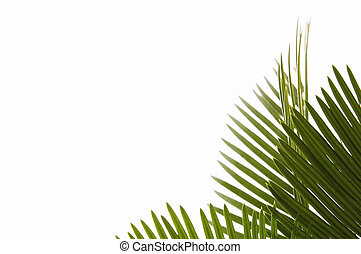 palms leaves isolated on the white background. natural frame