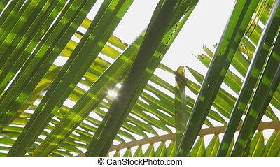 Palm leaves pan
