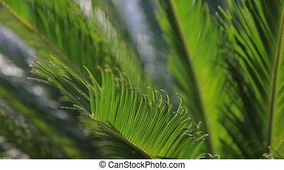 palm leaves swaying in the wind close up
