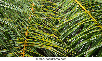 Palm leaves texture background