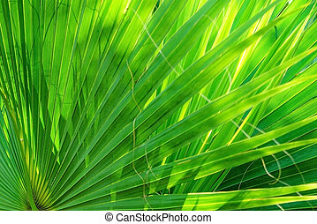 Palm leaves texture decoration resource with shadow