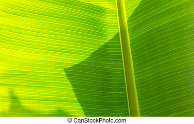 Palm leaves texture