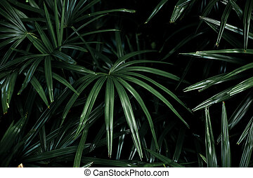 Palm leaves with background.