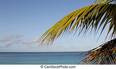 Palm leaves with ocean