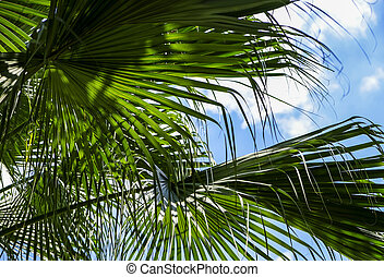 Palm leaves with sunlight in the garden Tropical leaf background