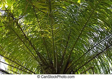 palm low angle
