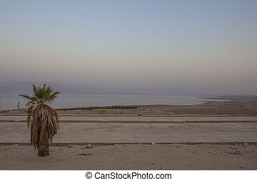 Palm near the Dead Sea in sunset time