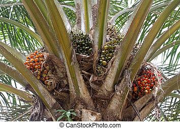 Palm oil, a well-balanced healthy edible oil is now an...