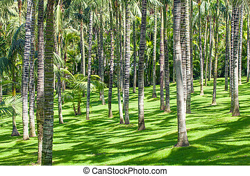 Palm oil tree plantation field aerial of agricultural industrial, Nature background