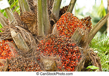 Palm oil,Thailand