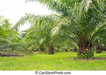 palm, olie, boompje