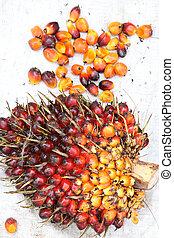 palm, olie, vruchten