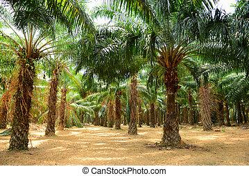 palm, olja, plantering