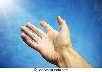 palm, om te, hemel