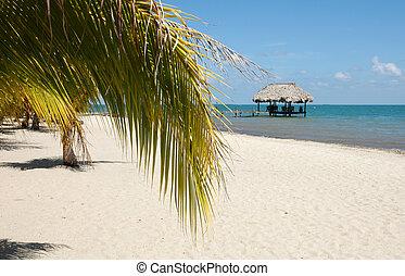 Palm on beach, Belize, Placencia