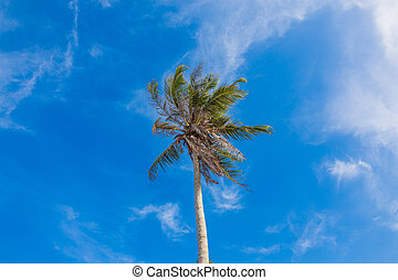 palm on the beach blue sky