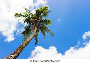 Palm on the blue sky background