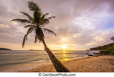 Palm on the sea beach in the Seychelles
