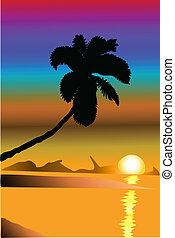 palm, ondergaande zon