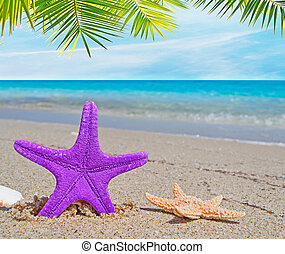 starfish, palms and shells in a desert beach