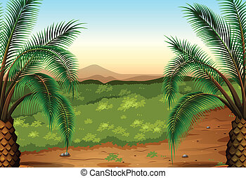 Palm plants and grass