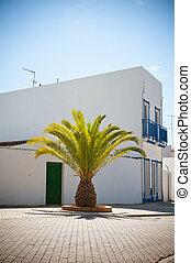 palm, portugal, hus, träd, sommar