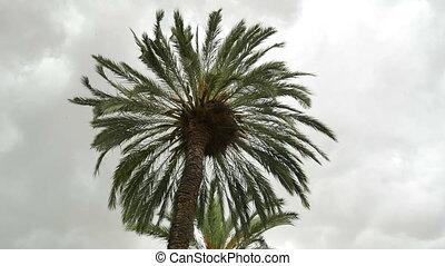 Palm rain cloud timelapse