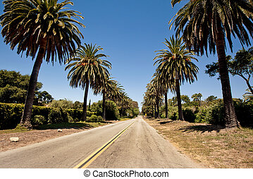 Palm road in Santa Barbara