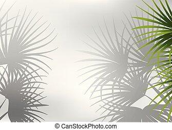 palm, schaduw, blad, achtergrond