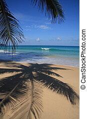 Palm Shadow on Tropical Beach