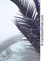 Palm shadow on white wall