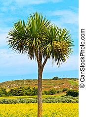 palm, singel, träd