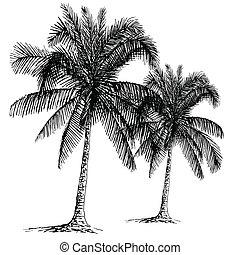 Palm sketch. Hand drawn vector illustration.