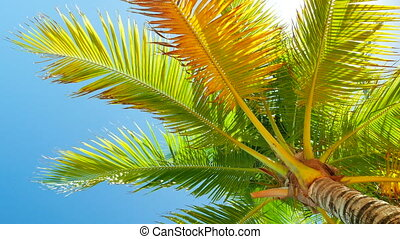 Palm Slowly Swinging in the Wind - Look at a palm tree trunk...