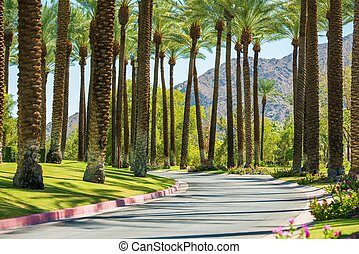 Palm Springs Road, California, United States. Palm Trees.
