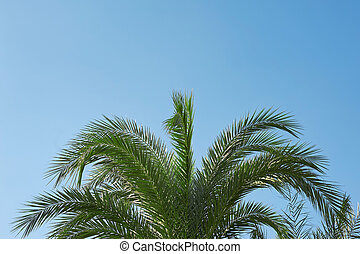 Palm sunday concept: Leaves frame of coconut branches with cloudy blue sky background