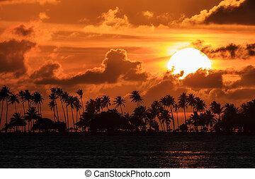 Palm Sunset Puerto Rico