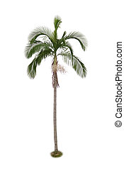 palm trä, bakgrund, isolerat, vit