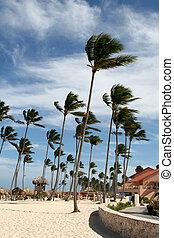 palm trä, linda, sopat, tillflykt