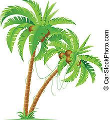 palm trä