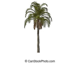 Palm Tree - 3D illustration of a palm tree