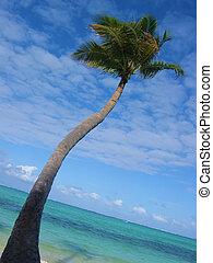 Palm Tree 7