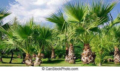Palm tree against a blue sky.