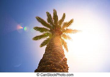 palm tree against sunny blue sky