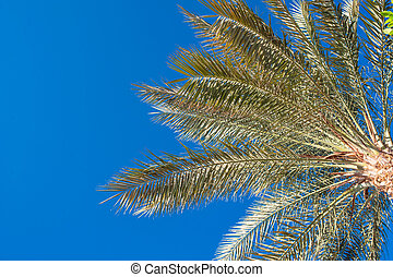 palm tree against the sky in summer