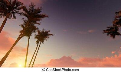 Palm tree alley on sunset 4k