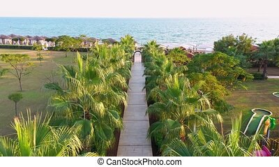 Palm tree alley way leading to sea, aerial view.