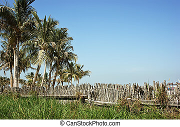 palm tree and an old wicker fence
