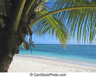 Palm tree and blue sea from Nattes island, Nosy Boraha, Sainte,Marie island, Madagascar